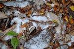 11月3日に金剛山でうっすら積雪。