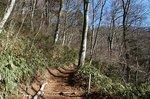 ブナの木と冬の千早本道